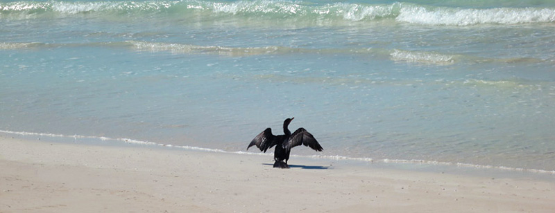 Cormorant on the beach